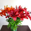 lily display1