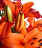 lily display5