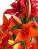 lily display7