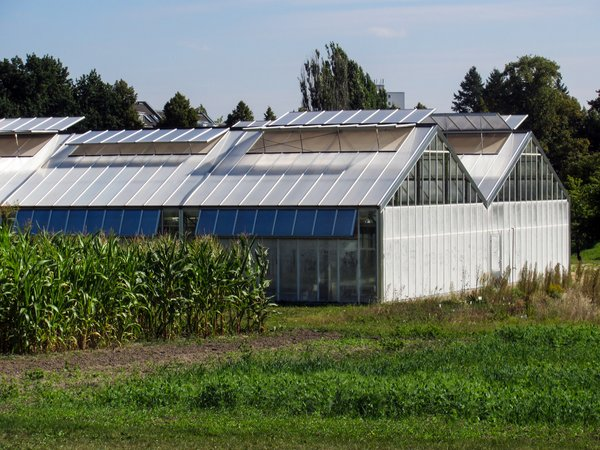 glass houses and fields: glass houses and fields