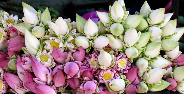 lotus buds1: bundles of tight lotus flower buds used in Buddhist devotion