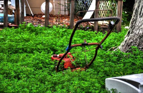 Time To Mow: Lawn mower in overgrowth of ground cover