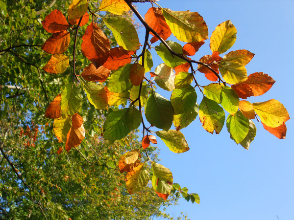 autumn leaves: autumn leaves