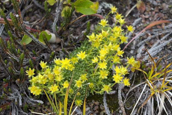 Free stock photos rgbstock free stock images tiny mountain tiny mountain flower mightylinksfo