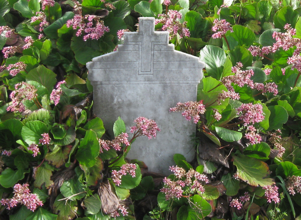 tombstone among the flowers: a tombstone in a cemetery on the hills, Liguria, Northern Italy