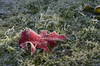 fallen leaf 2