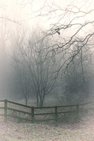 Misty woods: Misty Morning photos