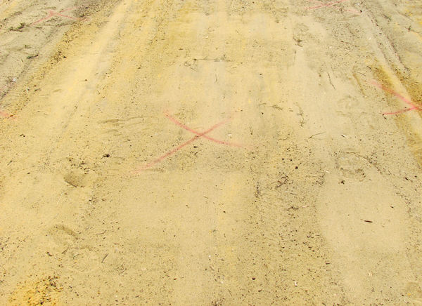 X marks the spot  X Marks The Spot Sand