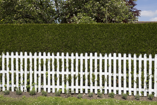 Picket fence and hedge: A traditional wooden picket fence and hedge bordering a garden in England.