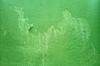 Grunge Wall Textures (Green)