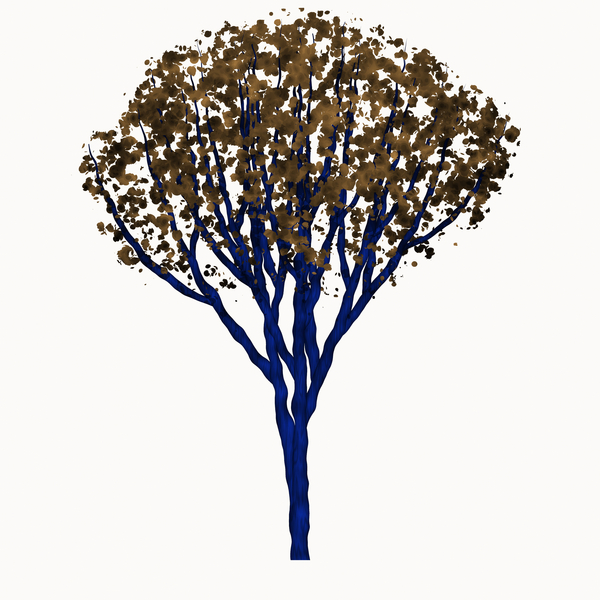 Leafy Tree Graphic 3: A graphic of an isolated leafy tree against a white background.