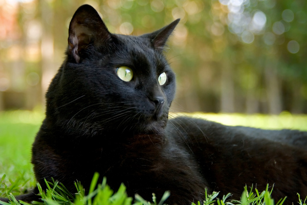 Black Cat: Lying on the garden. What else would a cat do?