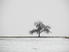 solitary winter tree