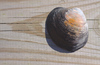 Shell on a board