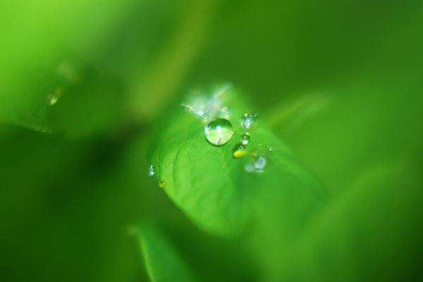 Drop on a Leaf: Close Up of a rain drop on a leaf.