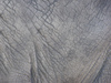 Elephant skin