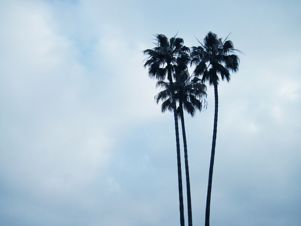 Palms: Three palms.