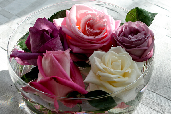 roses: A bowl with different roses in the sun