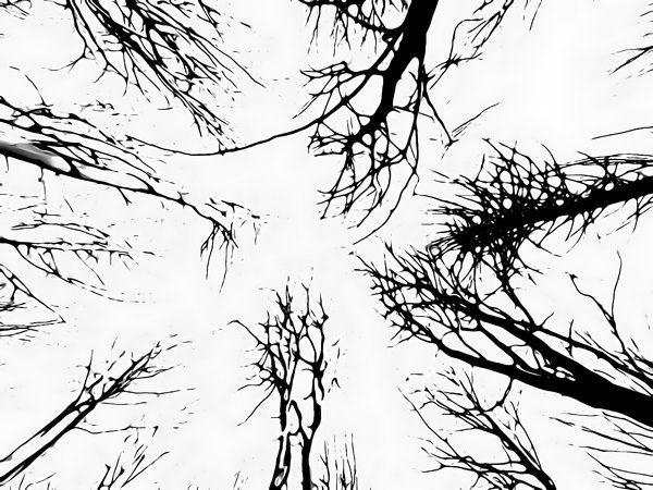 Scary Trees 2: Looking up in a forest of tree silhouettes against a white background. You may prefer:  http://www.rgbstock.com/photo/olzeyTS/Gargoyle  or:  http://www.rgbstock.com/photo/nR4pFy6/Grunge+Tree
