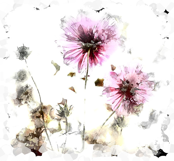Grunge Flower 8: A grungy impressionistic painted flower made from a public domain image. You may prefer:  http://www.rgbstock.com/photo/o3BdbJi/Fairy+Iris+Border+11  or:  http://www.rgbstock.com/photo/nHP0muC/Rainbow+Dandelion