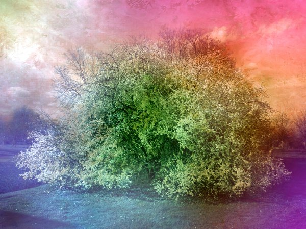 Collage Fantasy Tree 4: A fantasy collage made with a public domain image. You may prefer:  http://www.rgbstock.com/photo/ofHONqM/Collage+Fantasy+Tree+1  or:  http://www.rgbstock.com/photo/nPv74wI/Vivid+Fantasy+Collage+3