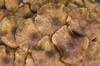 Mushroom texture