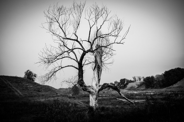 Lonely tree: Lonely mystical tree