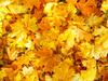 Golden Polish Autumn 2