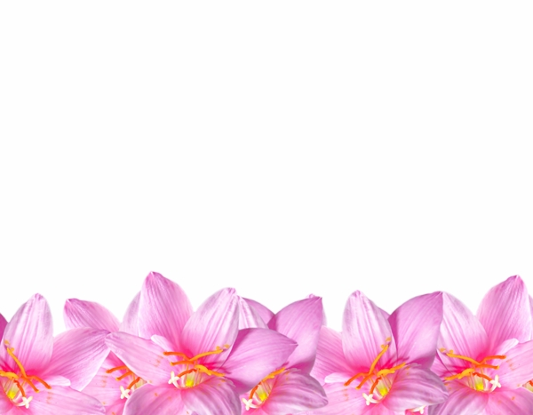 Natural Floral Border 3: A floral border of beautiful natural pink flowers. You may prefer:  http://www.rgbstock.com/photo/mVEl3Cw/Pretty+in+Pink+1  or:  http://www.rgbstock.com/photo/2dyVTby/Hibiscus+Border+1