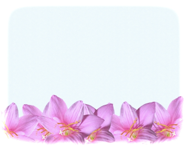 Natural Floral Border 1: A floral border of beautiful natural pink flowers. You may prefer:  http://www.rgbstock.com/photo/mVEl3Cw/Pretty+in+Pink+1  or:  http://www.rgbstock.com/photo/2dyVTby/Hibiscus+Border+1