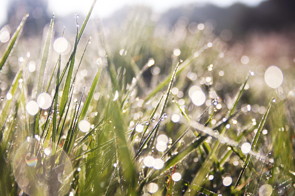 Grass in morning dew: Fresh grass in morning dew