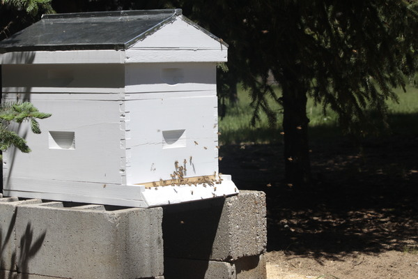 Honey Bees: bees, bee keeping, honey bees
