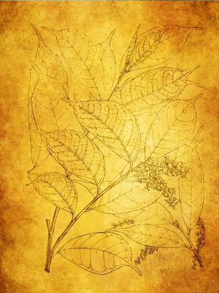 Botanical background: Botanical drawing was used to make this texture