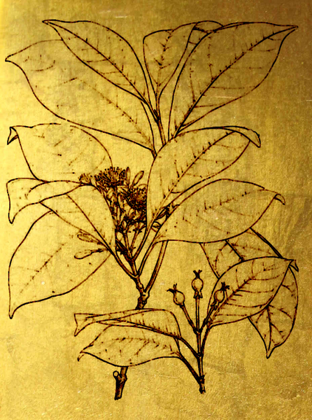 Gold Flower: Botanical drawing on a gold background
