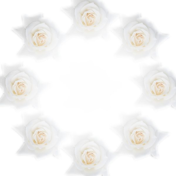 Round White Rose Border 1: A circular border or frame of white roses. You may prefer:  http://www.rgbstock.com/photo/2dyVYXk/White+Rose+Border+1  or:  http://www.rgbstock.com/photo/2dyVNiP/Floral+Border+31