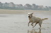 Dogs at the sea side 1