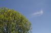 Tree 'n Sky