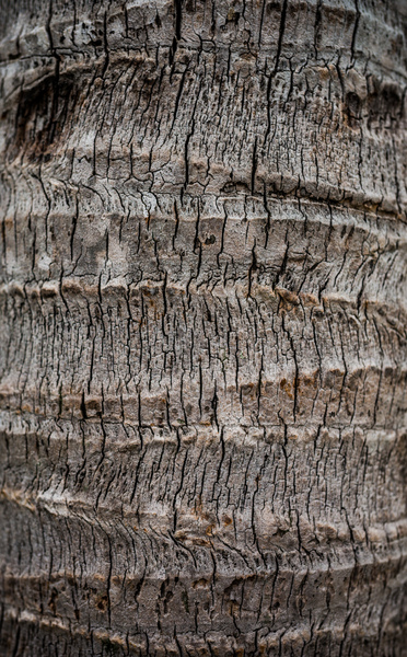 Palm Tree Bark: Textured