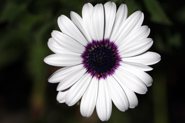Free stock photos rgbstock free stock images white purple white purple flower mightylinksfo