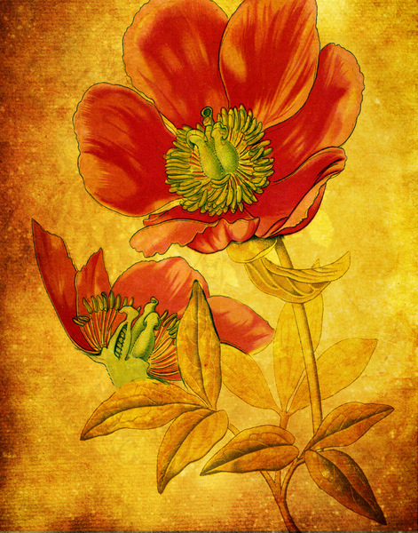 Botanical illustration: Botanical drawing was used on a layered background