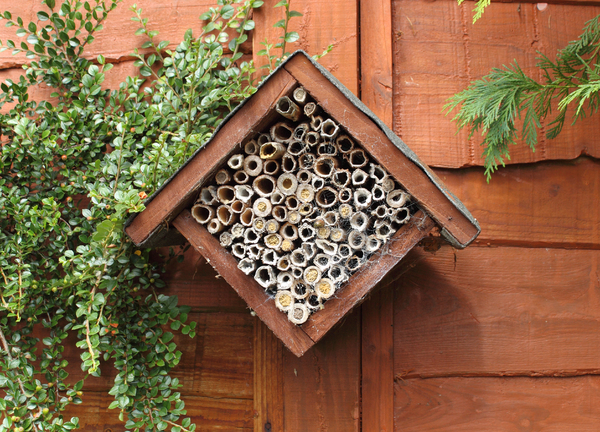 Bee House Tubes For Carpenter Bees Some Have Been Used This Year In South