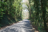 Welsh Country Lane