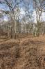Heathland birch forest