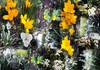 Spring in a city garden