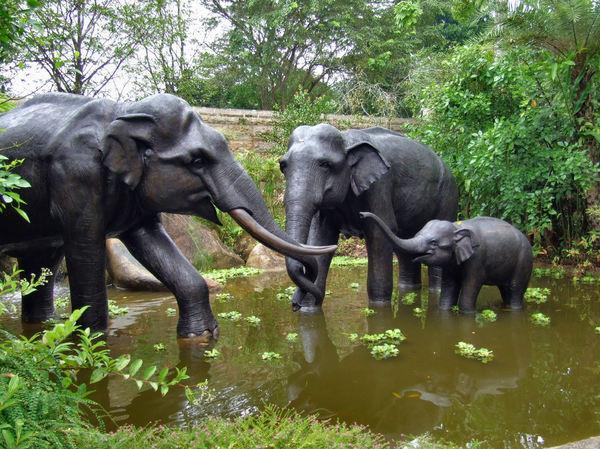 Triumph amme BH zoological museum kbh