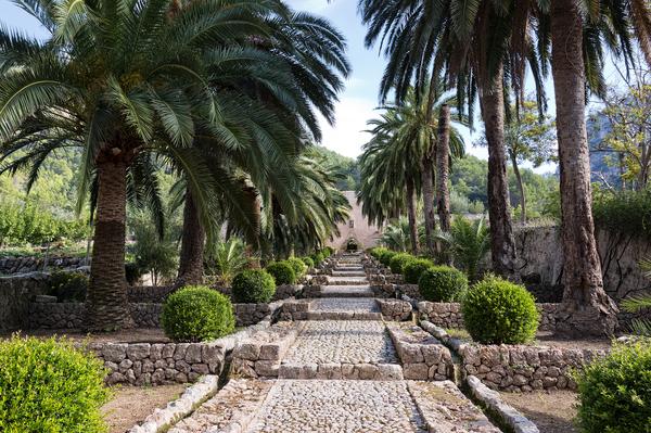 Exceptional Palm Tree Garden