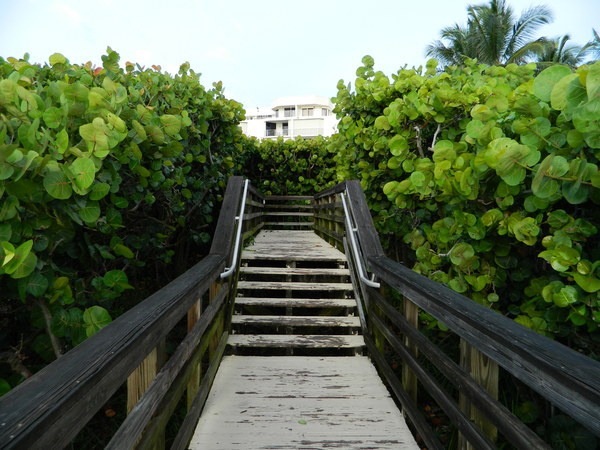 Path from the beach: Juno Beach Path from the beach with sea grapes
